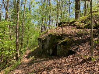 Yellow Trail April 2021